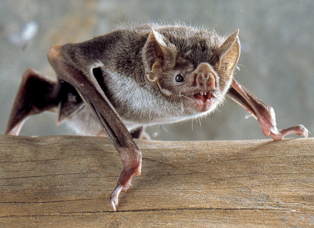 Key bat control cycles